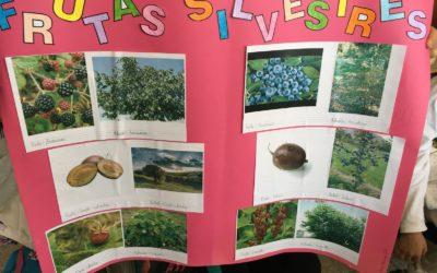🍊🍋🍏🍐 Frutas de diferentes estaciones. Trabajos de alumnado 🍊🍋🍏🍐